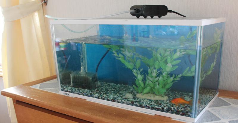 aquarium-moving