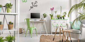 Farniture-and-Plants-Move-1