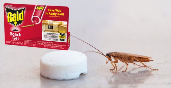cockroach-bait