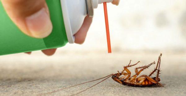 cockroach-pesticide