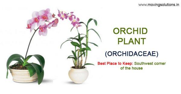 Orchid-Plant-Vastu