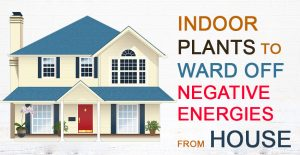 Vastu-Plants-to-Ward-Off-Negative-Energies-from-House